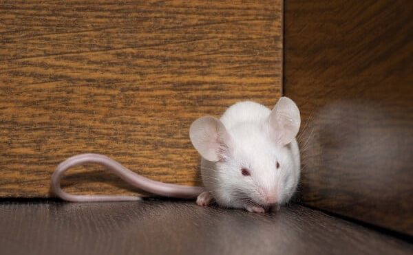 Identifying Household Entry Points For Rodents