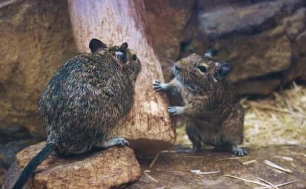 Tips For Making Your Home Less Vulnerable To Rodents