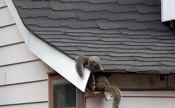In The Event of Squirrels in the Attic, Do This