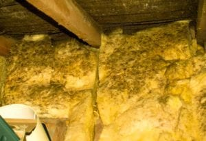 moldy insulation