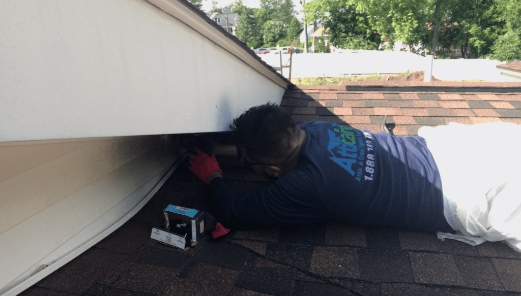 Attic and Crawl Space Rodent Proofing Service Company Los Angeles CA